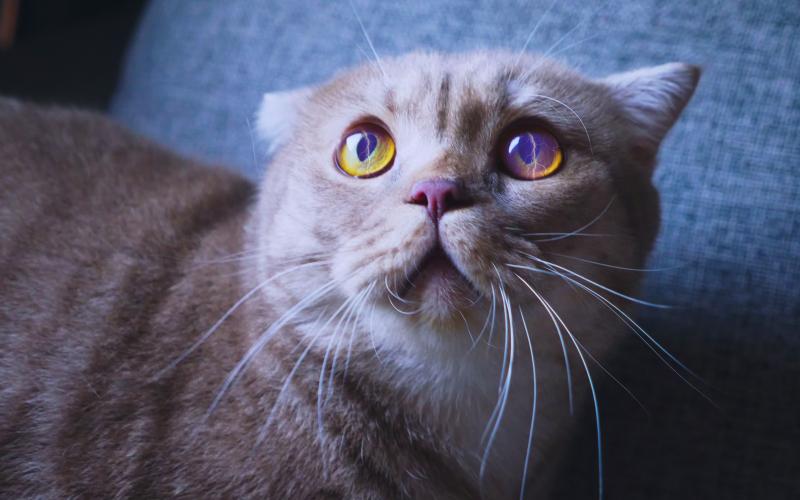 scared cat-lightning