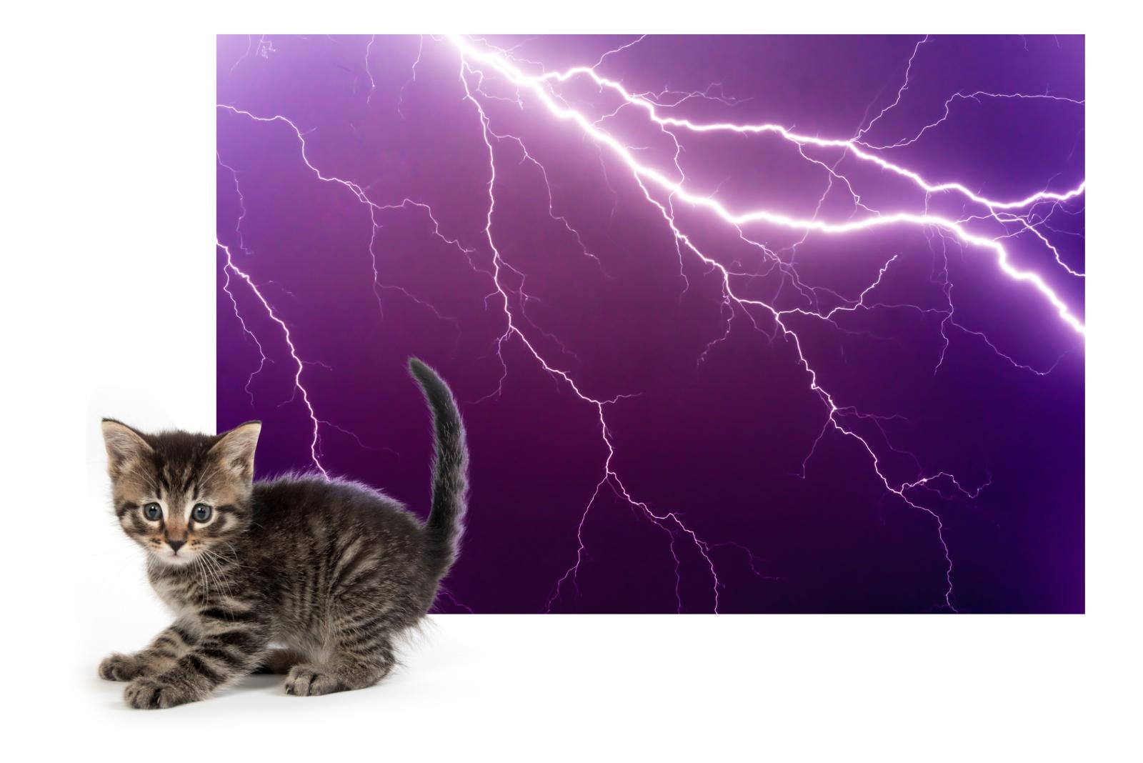 scared-pets-lightning