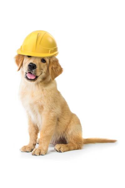 builder-dog